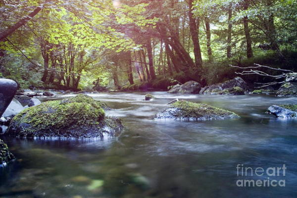 Wall Art - Photograph - Colligan River Dream 1 by Marc Daly