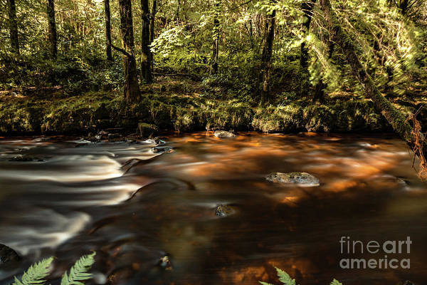 Photograph - Colligan River Flow by Marc Daly