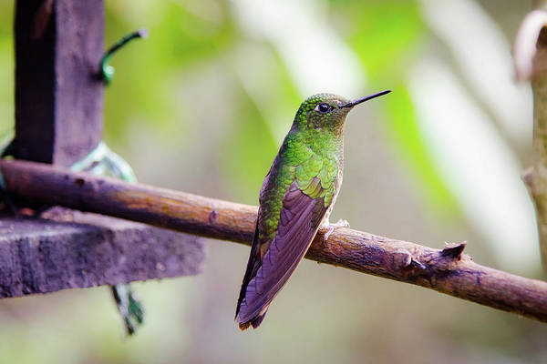 Beautiful Hummingbird Photograph - Colombian Hummingbird by Michael Weber
