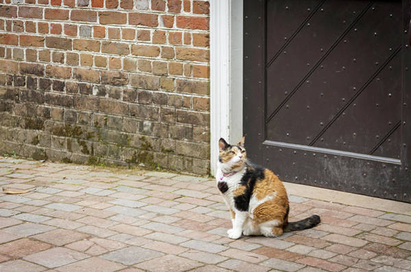 Wall Art - Photograph - Colonial Calico by Teresa Mucha