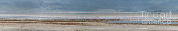 Photograph - Colony Of Flamingos At Ngorongoro Crater - Large Panorama by RicardMN Photography