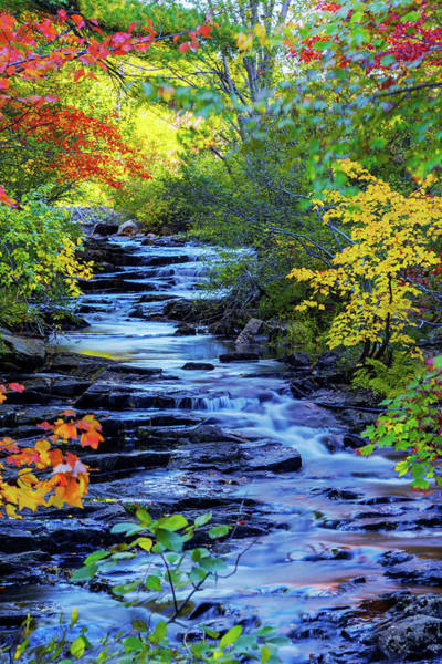 Acadia National Park Wall Art - Photograph - Color Alley by Chad Dutson