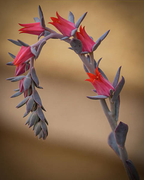 Photograph - Color And Curve by Teresa Wilson