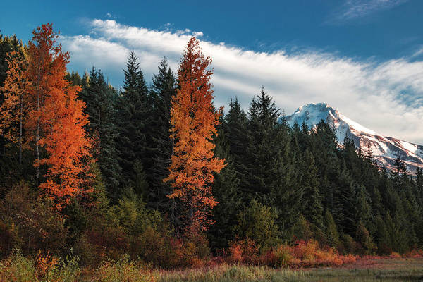 Photograph - Color At Mt. Hood by Hans Franchesco
