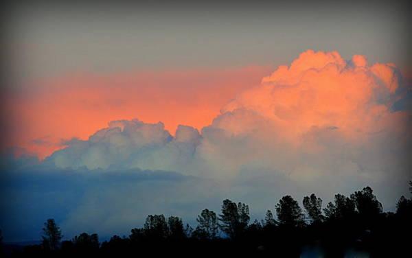 Photograph - Color Burst by AJ Schibig