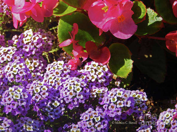 Photograph - Color Combination Flowers Cc63 by Monica C Stovall