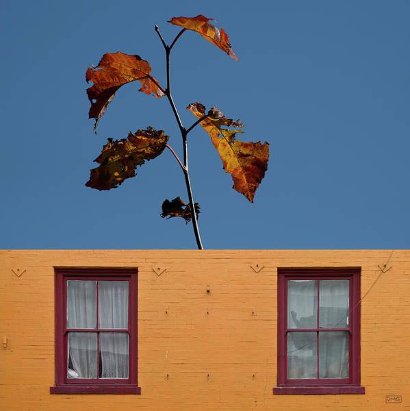 Photograph - Color Composite IIi by David Gordon