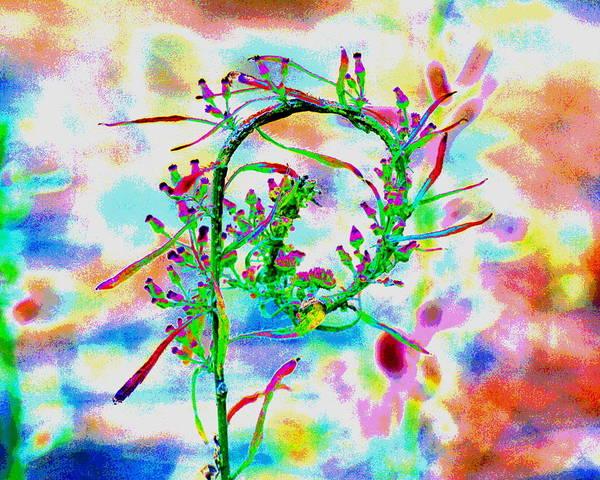 Color Curl Art Print