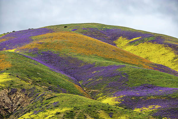 Photograph - Color Mountain I by Peter Tellone