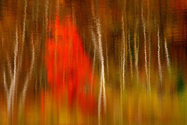 Photograph - Color Reflections by Denise Bush