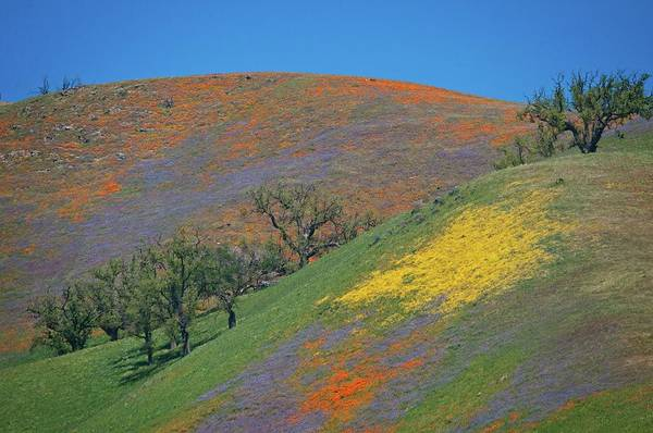 Photograph - Color Splashed Hills by Lynn Bauer