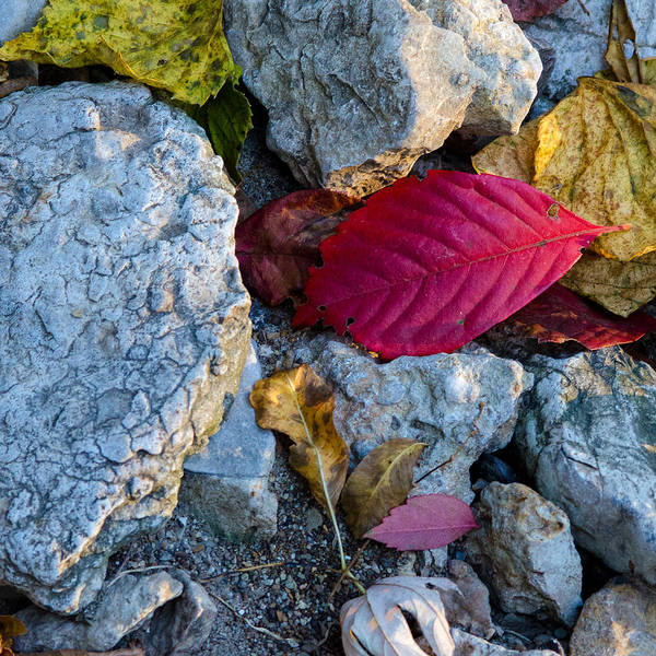 Photograph - Color Underfoot by Jeff Phillippi