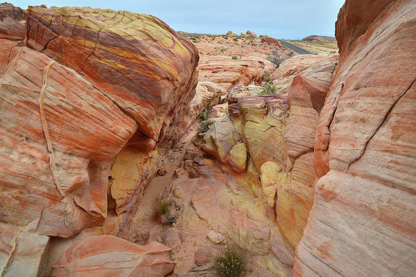 Photograph - Color Walk In Valley Of Fire State Park by Ray Mathis