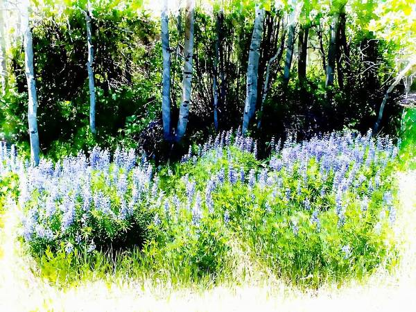 Photograph - Colorado Apens And Flowers by Joseph Hendrix
