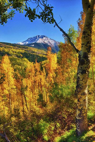 Treen Photograph - Colorado Aspen by Priscilla Burgers