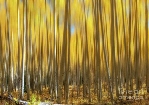 Photograph - Colorado Aspen Trees Abstract by Michael Ver Sprill