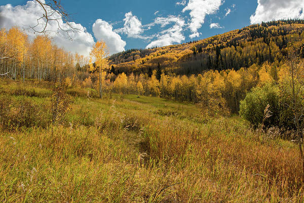 Grand Mesa National Forest Photograph - Colorado Autumn Colors by John Bartelt