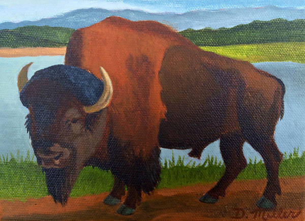 Painting - Colorado Buffalo by Dustin Miller