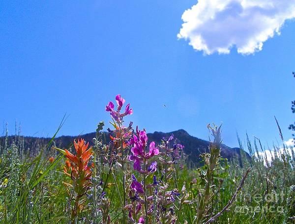 Photograph - Colorado Colors by Alan Johnson