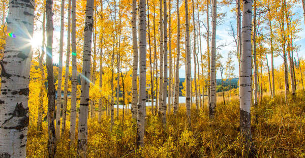 Photograph - Colorado Expectations by Kevin Dietrich