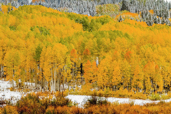 Photograph - Colorado Fall Color In The Snow by Teri Virbickis