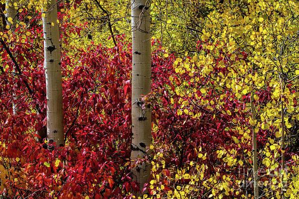 Photograph - Colorado Finery by Jim Garrison