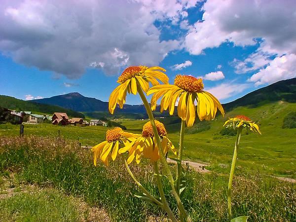 Wall Art - Photograph - Colorado Flowers by Patrick  Flynn