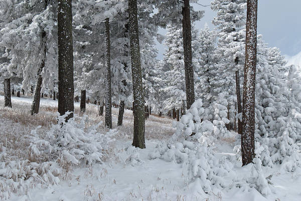 Photograph - Colorado Foothills Winter Forest by Cascade Colors
