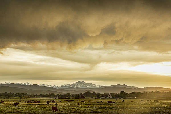 Photograph - Colorado Grazing by James BO Insogna