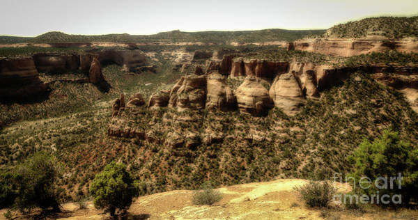 Photograph - Colorado National Monument Koch Ovens by Jon Burch Photography