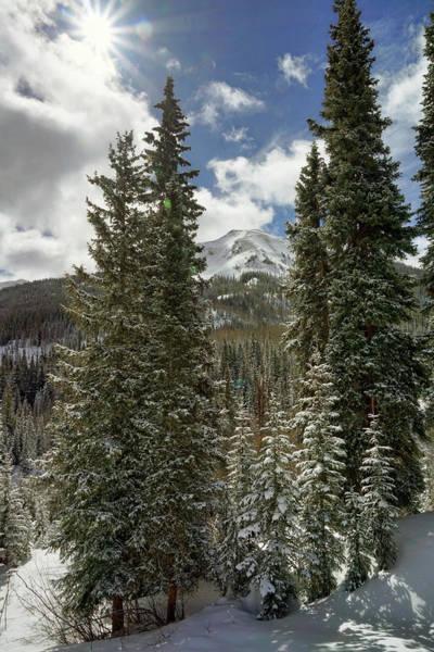Photograph - Colorado Pines by Leda Robertson