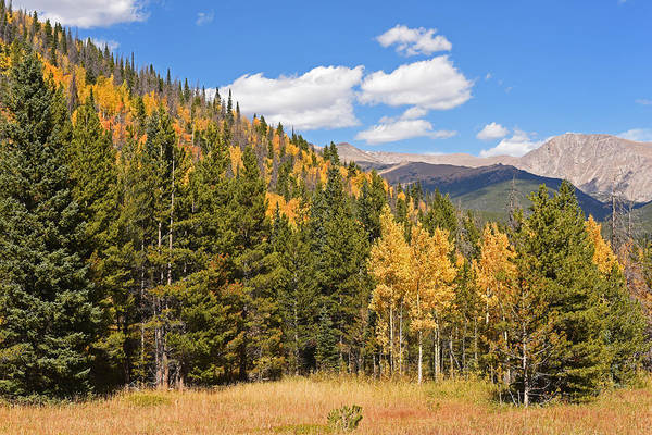 Photograph - Colorado Rockies National Park Fall Foliage 2 by Toby McGuire