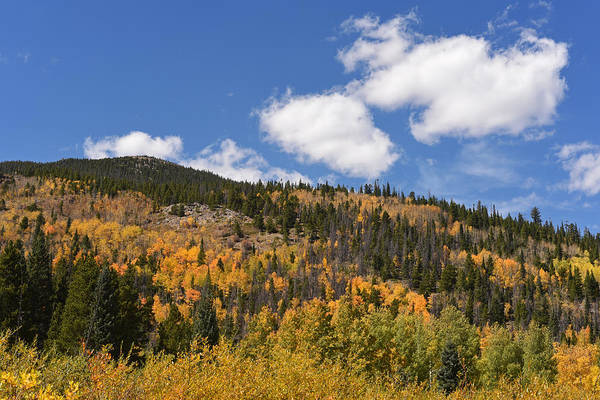 Photograph - Colorado Rockies National Park Fall Foliage by Toby McGuire