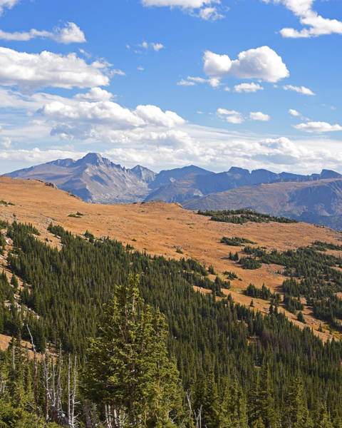 Photograph - Colorado Rockies National Park Forestland by Toby McGuire