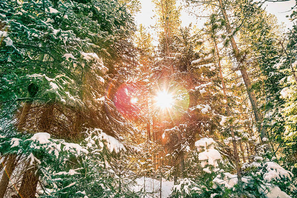 Photograph - Colorado Rocky Mountain Snow And Sunshine by James BO Insogna