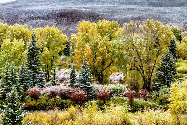 Photograph - Colorado Snowy Fall Morning by Teri Virbickis