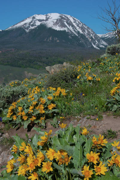 Photograph - Colorado Spring Wildflower And Mountain Portrait by Cascade Colors