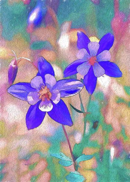 Digital Art - Colorado State Flower 2 by OLena Art - Lena Owens