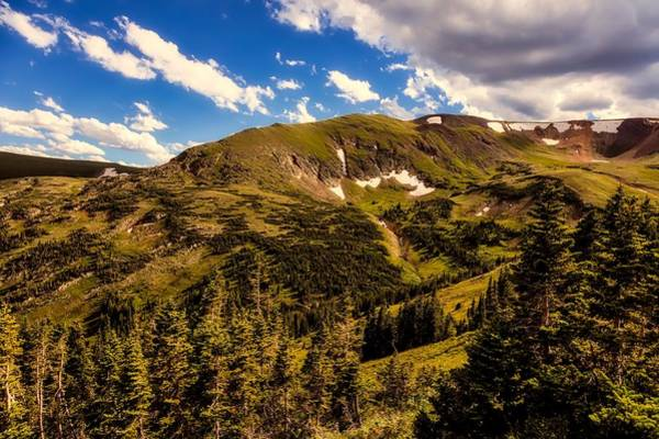 Timberline Photograph - Colorado Timberline by L O C