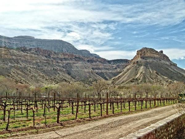 Fruita Photograph - Colorado Vineyard by Jeremy Tamsen