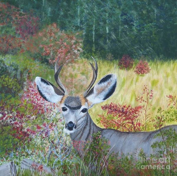 Colorado White Tail Deer Art Print