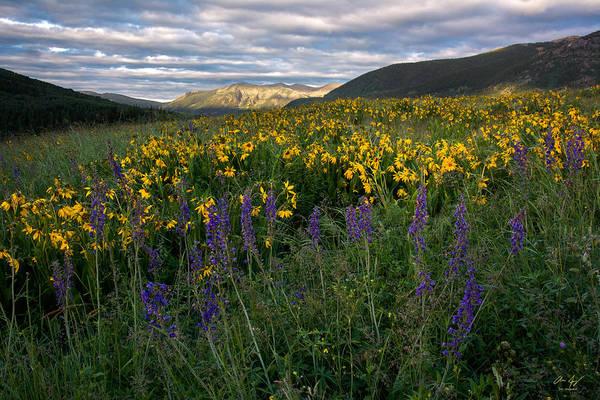 Wall Art - Photograph - Colorado Wildflower Sunrise by Aaron Spong
