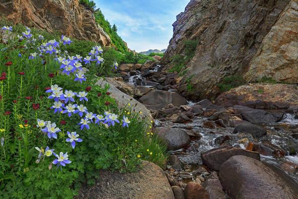 Wall Art - Photograph - Colorado Wildflowers Near Aspen 19-1 by Rob Greebon