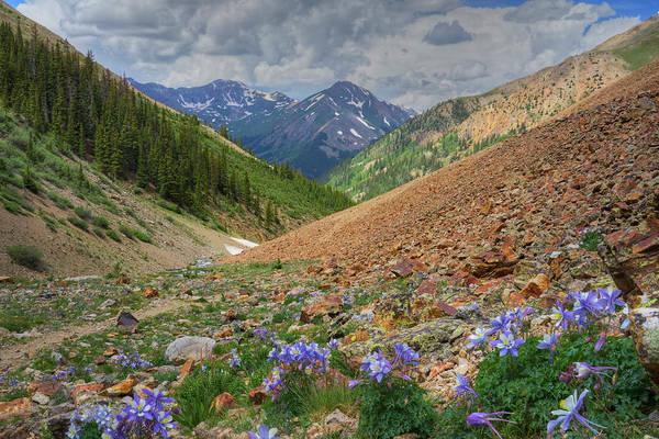 Wall Art - Photograph - Colorado Wildflowers On The Silver Creek Trail - Lake City 1 by Rob Greebon