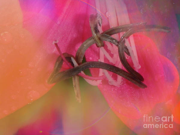 Photograph - Colored By Nature by Judy Hall-Folde