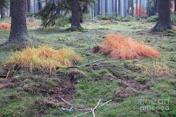 Woodland Wall Art - Photograph - Colored Grass In The Autumn Forest by Michal Boubin