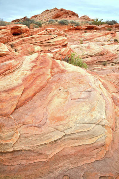 Photograph - Colored Sandstone In Valley Of Fire by Ray Mathis