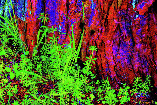Mixed Media - Colorfilled Nature by Ben Upham III