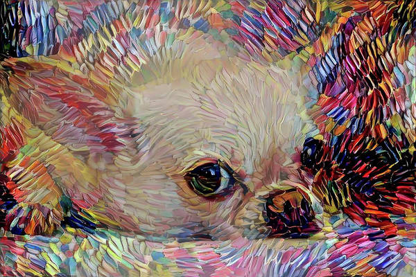 Mixed Media - Colorful Abstract Chihuahua by Peggy Collins