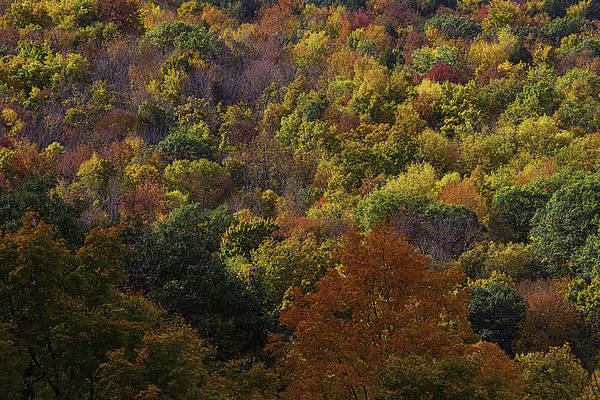 Photograph - Colorful Autumn Hillside by Garry Gay